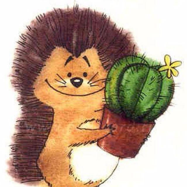 Volga-Cactus